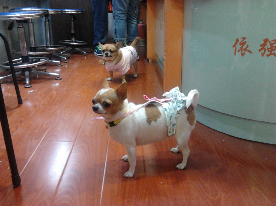 mascotas-y-sus-complementos_pets-and-their-accesories_china-in-crowd (1)